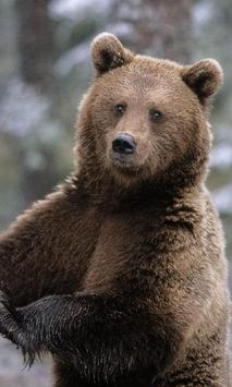 Amazing Bears Wallpapers screenshot 1