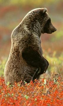 Amazing Bears Wallpapers screenshot 2