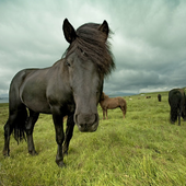 Best Horse Wallpapers icon