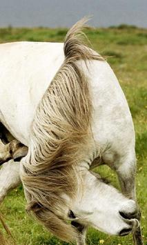 Best Horse Wallpapers apk screenshot