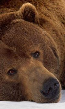 Brown Bear Themes screenshot 1