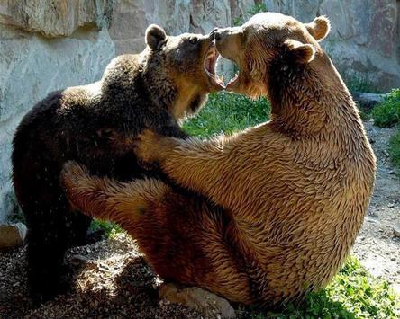 Brown Bear Themes apk screenshot