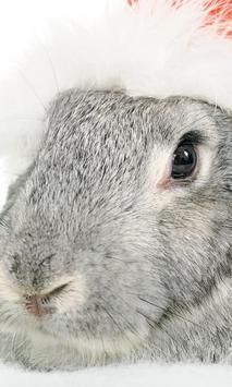 Bunny and Rabbit Wallpapers apk screenshot