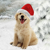 Christmas animals Wallpapers icon