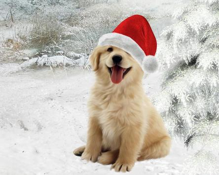 Christmas animals Wallpapers apk screenshot