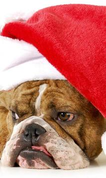 Christmas animals Wallpapers poster