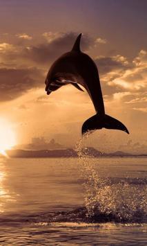 Dolphin Wallpapers apk screenshot