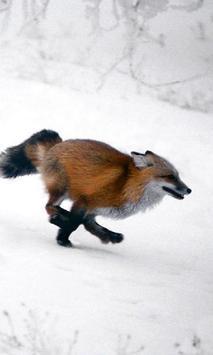 Fox Themes apk screenshot