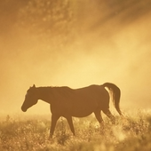 Horse HD Wallpapers icon
