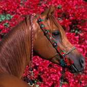 Wallpapers HD Horses icon