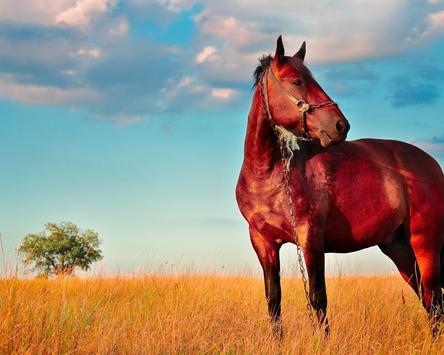 Wallpapers HD Horses apk screenshot