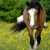 Wild Animals Horse Wallpapers icon
