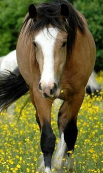 Wild Animals Horse Wallpapers apk screenshot