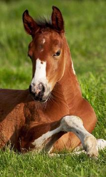 Wild Animals Horse Wallpapers poster