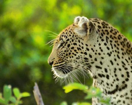 Wild Africa Animals Themes apk screenshot