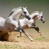 Wild Horse HD Themes icon