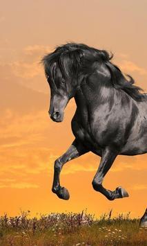 Wild Horse HD Themes apk screenshot