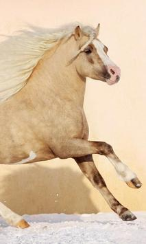 Wild Horses Wallpapers screenshot 1