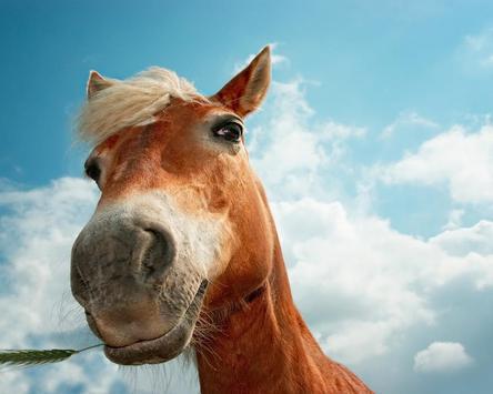 Wild Horses Wallpapers apk screenshot