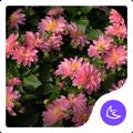 Flowers APUS Launcher theme
