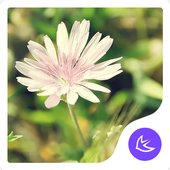 Daisy-APUS Launcher theme icon