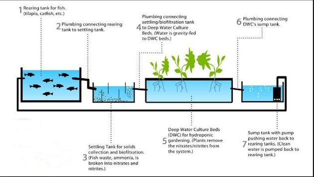 aquaponics techniques ideas screenshot 3