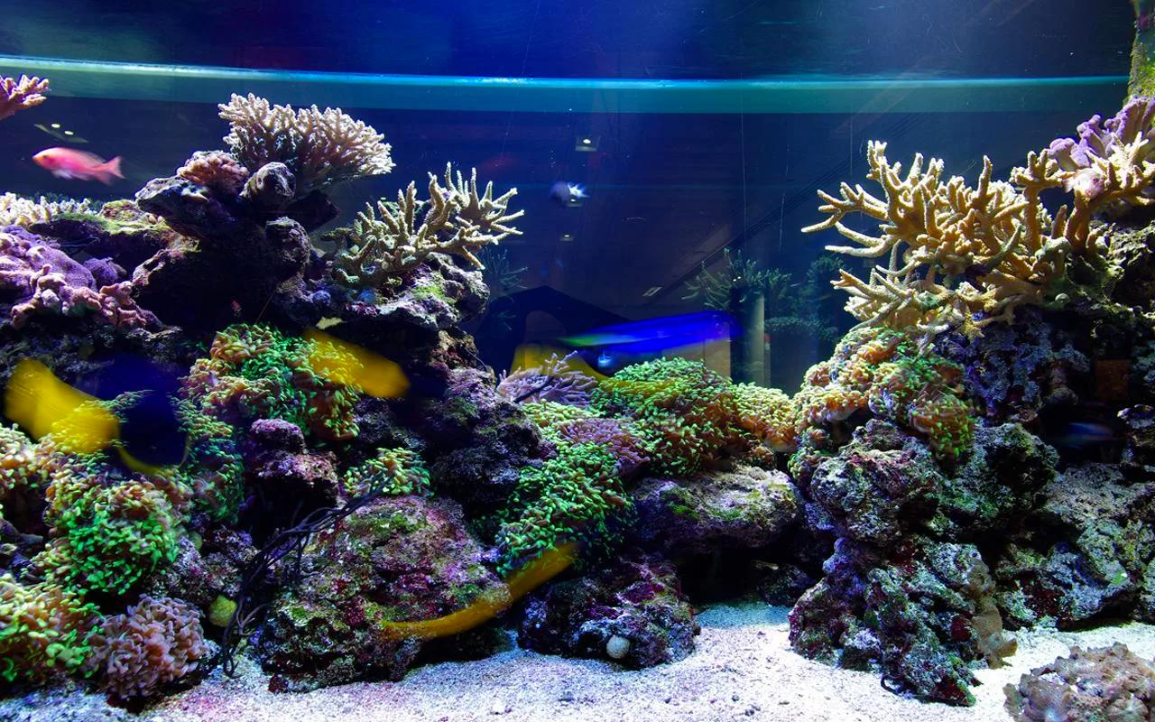 3d Aquarium Live Wallpaper Hd For Android Apk Download