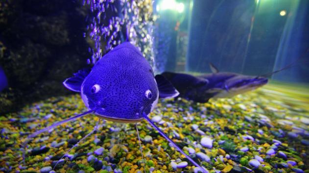 Aquarium Wallpaper 2018 Pictures HD Images Free screenshot 4