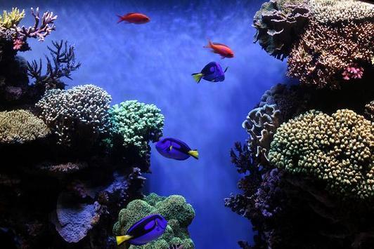 Aquarium Wallpaper 2018 Pictures HD Images Free screenshot 1