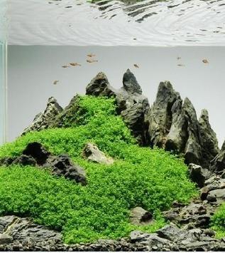 Aquascape Design screenshot 3