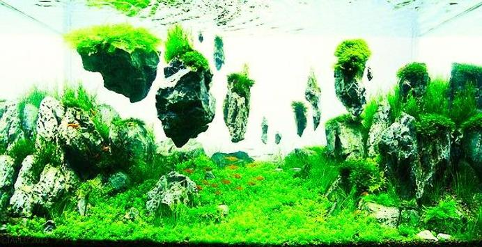 Aquascape Design aquascape design ideas apk download - free art & design app for