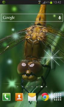 Dragonfly Live Wallpaper apk screenshot
