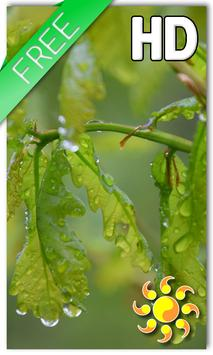 Drops Leaves LWP Free poster