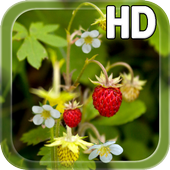 Forest Berry LWP icon