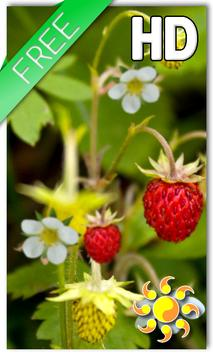 Forest Berry LWP poster
