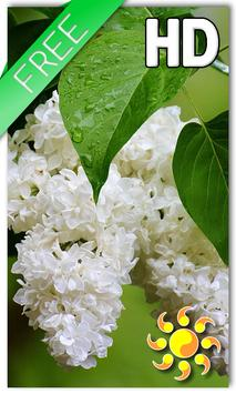 Flower Lilac Drops LWP poster