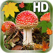 Autumn Leaves Mushroom LWP icon