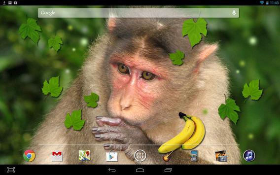 Monkey Live Wallpaper apk screenshot