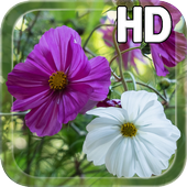 Summer Flowers Live HD icon