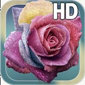 Raindrops Rose Live HD icon