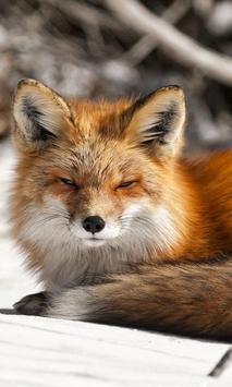 arctic fox wallpaper poster