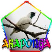 CANTO DA ARAPONGA icon