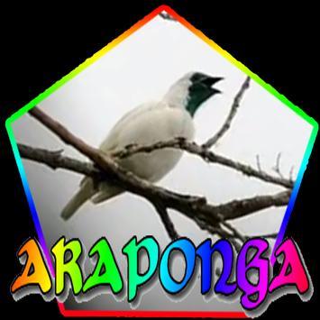 CANTO DA ARAPONGA poster