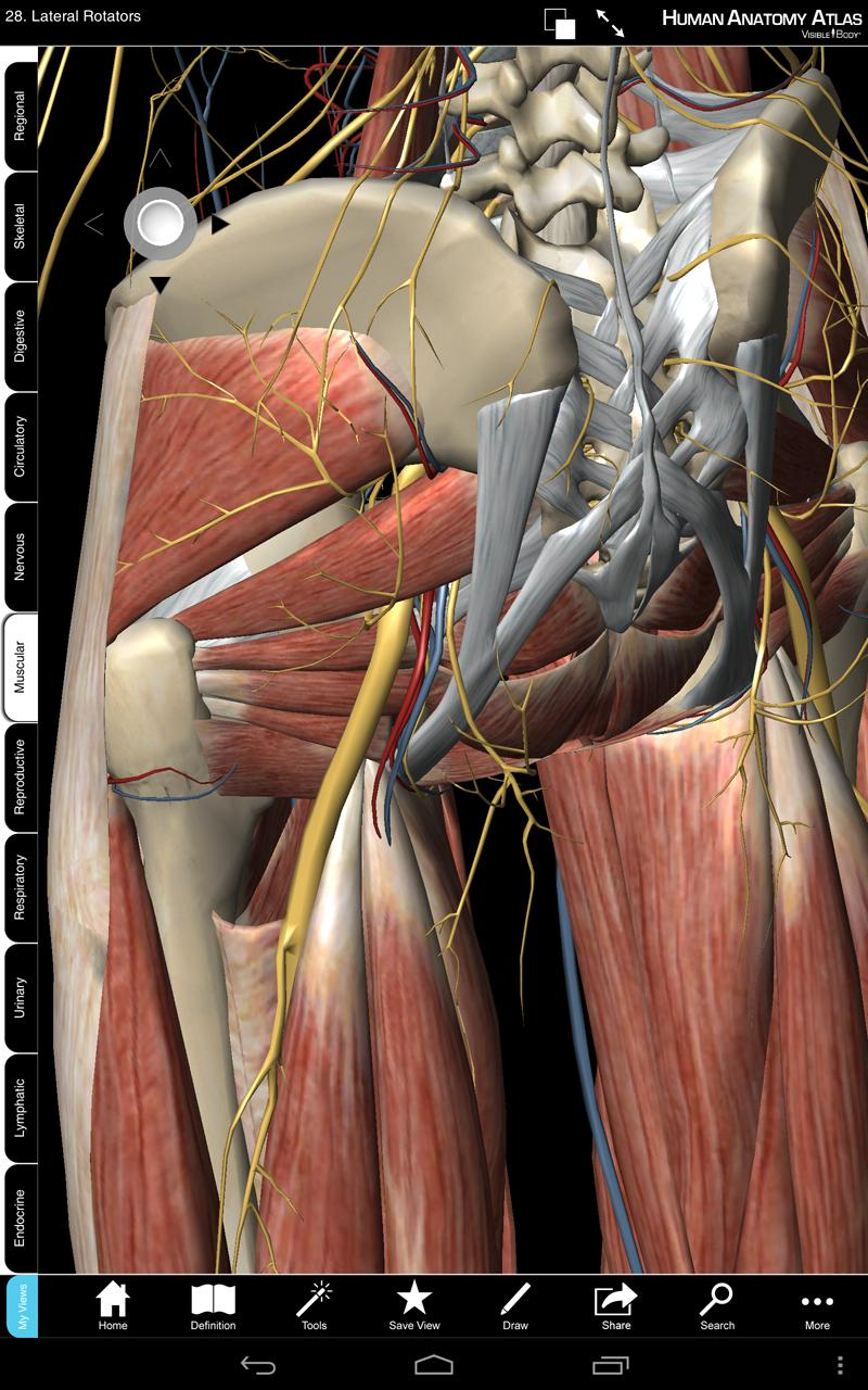 Human Anatomy Atlas - Springer for Android - APK Download