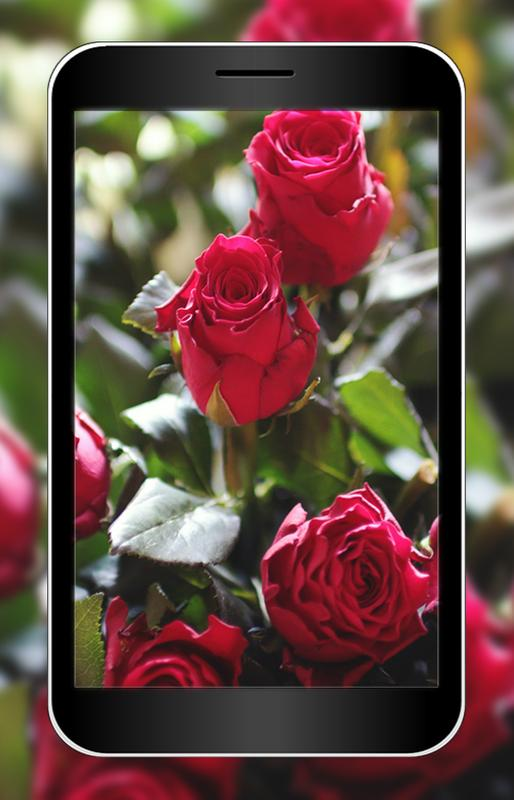 3d Rose Flower Wallpaper Hd For Android Apk Download