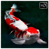 Koi Fish Wallpaper HD icon