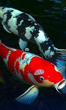 Koi Fish Wallpaper HD apk screenshot