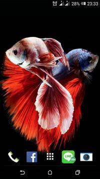 Siamese Fish Wallpaper poster