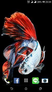 Siamese Fish Wallpaper apk screenshot