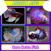 Rare Betta Fish icon